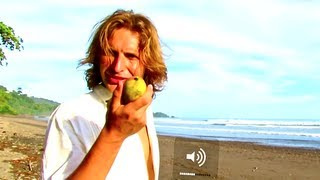 Best Fruit in the World - Mango trees at the beach - Let this sink down :) MANGO TREE COSTA RICA