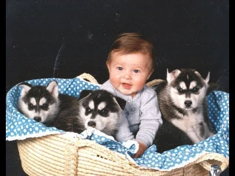 Husky Siberian And Babies Playing Videos Compilation 2016 Cute Dogs Love Babies