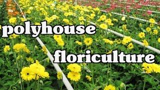 Floriculture - Gerbera & Carnation flowers ( Cut Flowers ) cultivation in Polyhouse - Paadi Pantalu
