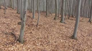 jelení zhod ( šesták)