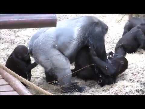 Xxx Mp4 Bauwi And Nakou Burgers Zoo Playing 3gp Sex
