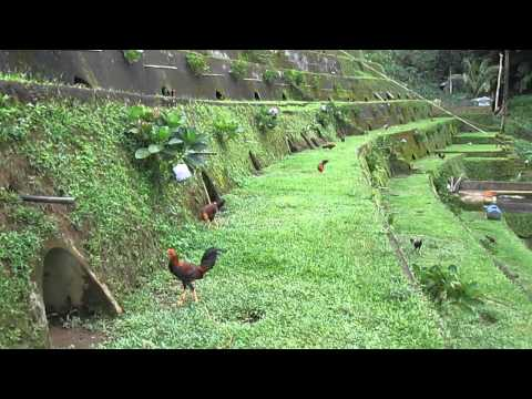 Eloterio E. Flores Game Farm