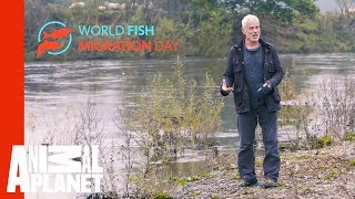 Join Jeremy Wade In Celebrating World Fish Migration Day