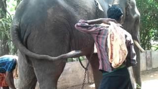 Elephant walking over wall