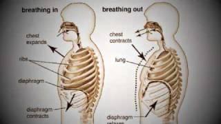 Using the Diaphragm - Muno Stavanger Sangtimer - Singing Lessons
