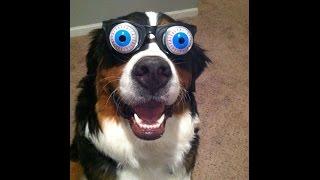 Best funy animals 2015