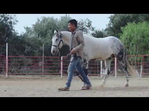 """Perdidos De Sinaloa - La Pura Verdad (Video Oficial) (2016) - """"EXCLUSIVO"""""""