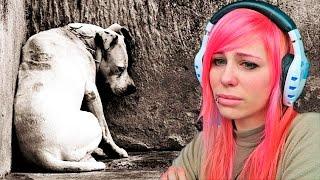 EL DIARIO DE UN PERRO - ¡¡NO ABANDONES!! | Video Reaccion