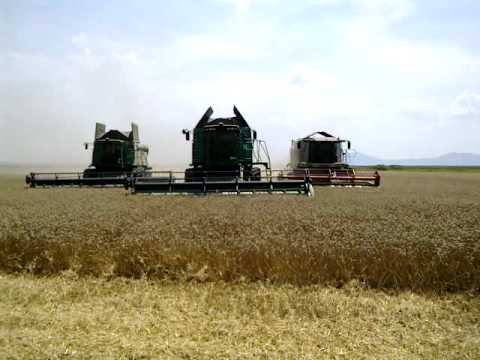 wheat harvest on the farm Maragro Romania with 3 combines.mp4