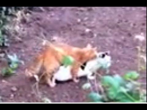 Xxx Mp4 Longest Mating Cats Xxx 3gp Sex