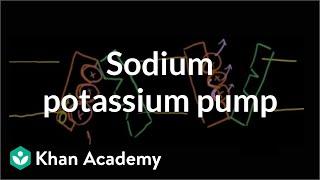Sodium-potassium pump   Cells   MCAT   Khan Academy