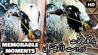 Memorable Moments With SONU Bull of the Year | Bakra Eid Special Short Film at Eid ul Adha 2017