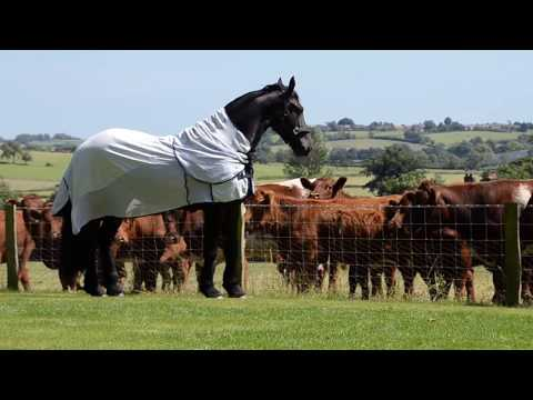 Xxx Mp4 Elegant Friesian Horse Meets The Neighbours Cows 3gp Sex