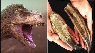 The Secret To Finding Giant Tyrannosaurus Rex Teeth