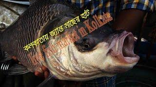 live fish market in Kolkata : কলকাতায় জ্যান্ত মাছের হাট