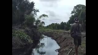 Mencing ikan dapat Gabus besar