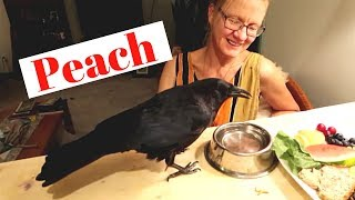 Living With A Crow