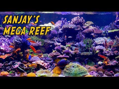 Xxx Mp4 Sanjay 500 Gallon Mega Reef 3gp Sex