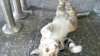 Metro istasyonunun maskotu sevimli yavru kedi