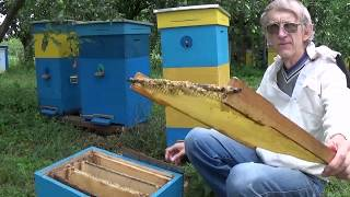 Effective Ukrainian Beehive. Why Effective, Productive & Innovative? (in ENGLISH)