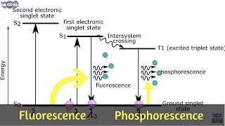 Basics and principle of Fluorescence & Phosphorescence measurement | Learn under 5 min | AI 06