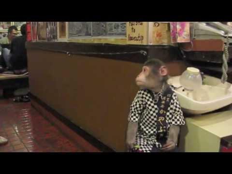 Xxx Mp4 Kayabuki Tavern Japan Monkey Izakaya 3gp Sex