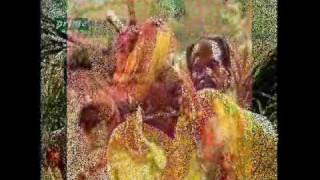 Mirza Maasi Kolun Janda by Alam Lohar - Mirza Sahiban