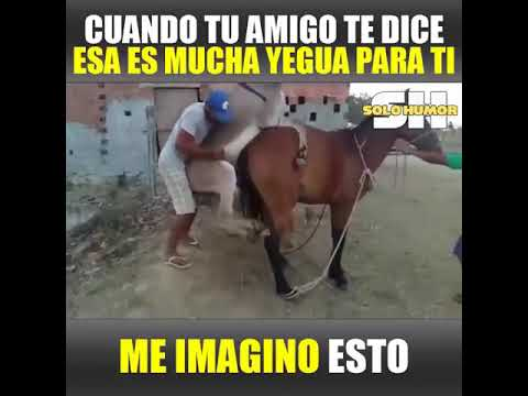 Donkey and horse do fuck