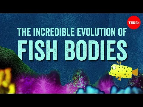 Why are fish fish-shaped? - Lauren Sallan