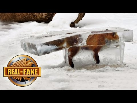 4 ANIMALS FROZEN ALIVE real or fake
