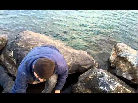 balık yok Hatay Dörtyol Canlı Çupra ile Kofana Tekniği