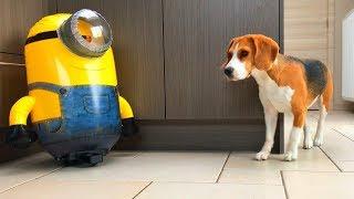 Funny Dogs VS MINION
