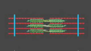 How a muscle contraction is signalled - Animation