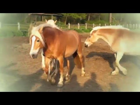 NEW Animals Mating ★ Animal Mating Videos Compilation ✔ Funny Video 2015 HD