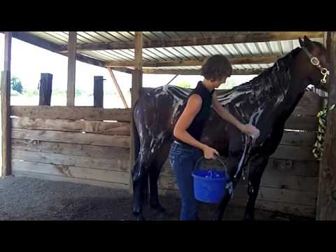 HorseTraining   A Girl And A Horse Trick Training  Fun How to Teach Your Horse