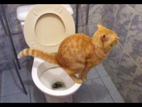 Gato en el baño