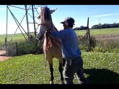 Tratador de cavalo toma sangue de animal na tentativa de salvar égua condenada ao sacrifício