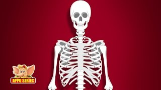 Learn Human Body - Skeleton System