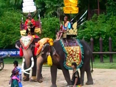แสดงช้างสามพราน2