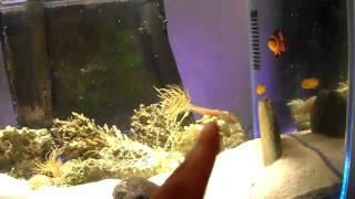 Chirag's Fluval Edge Aquarium Multi-Color LED Lighting Mod Vid#3