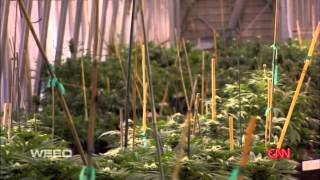 Dr Sanjay Gupta - Marijuana and Charlotte's Web