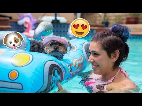 Xxx Mp4 Buying My Dog Baby Pool Toys 3gp Sex