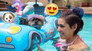 Buying My Dog Baby Pool Toys
