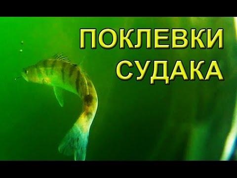 ловля судака на поплавок видео