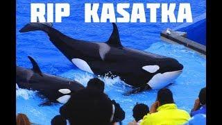 In Loving Memory of Kasatka (RIP)