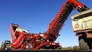 Grimme field loading station CleanLoader / Feldverladestation | Celeriac Harvest | Novifarm