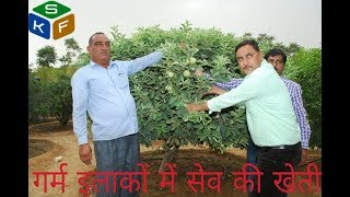Apple farming in rajasthan(सेव की खेती)  RAMKARAN Khedar Innovative Farmer (farmer scientist)