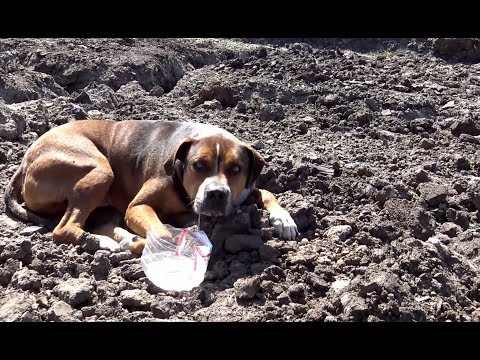 Xxx Mp4 Hope For Paws Abandoned Dog In A Construction Site Wouldn T Move Because He Was So Scared 3gp Sex