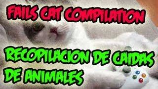 ★ Epic Cat Fails Compilation - Recopilacion de Caidas de Animales ✔