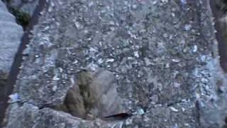 very dangerous video!stunning!